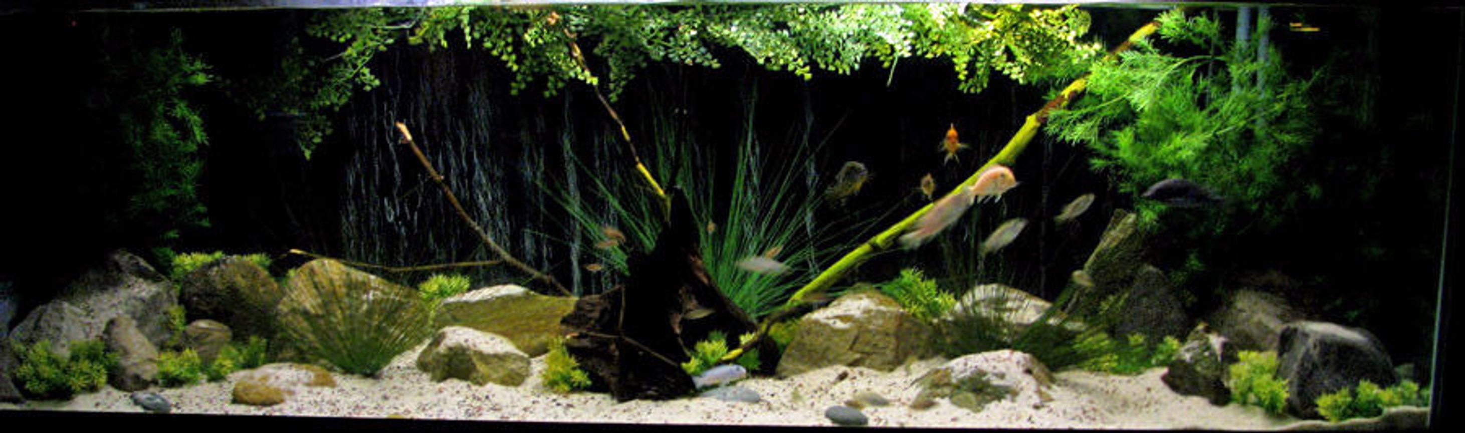 135 gallons freshwater fish tank (mostly fish and non-living decorations) - 135 gallon malawi