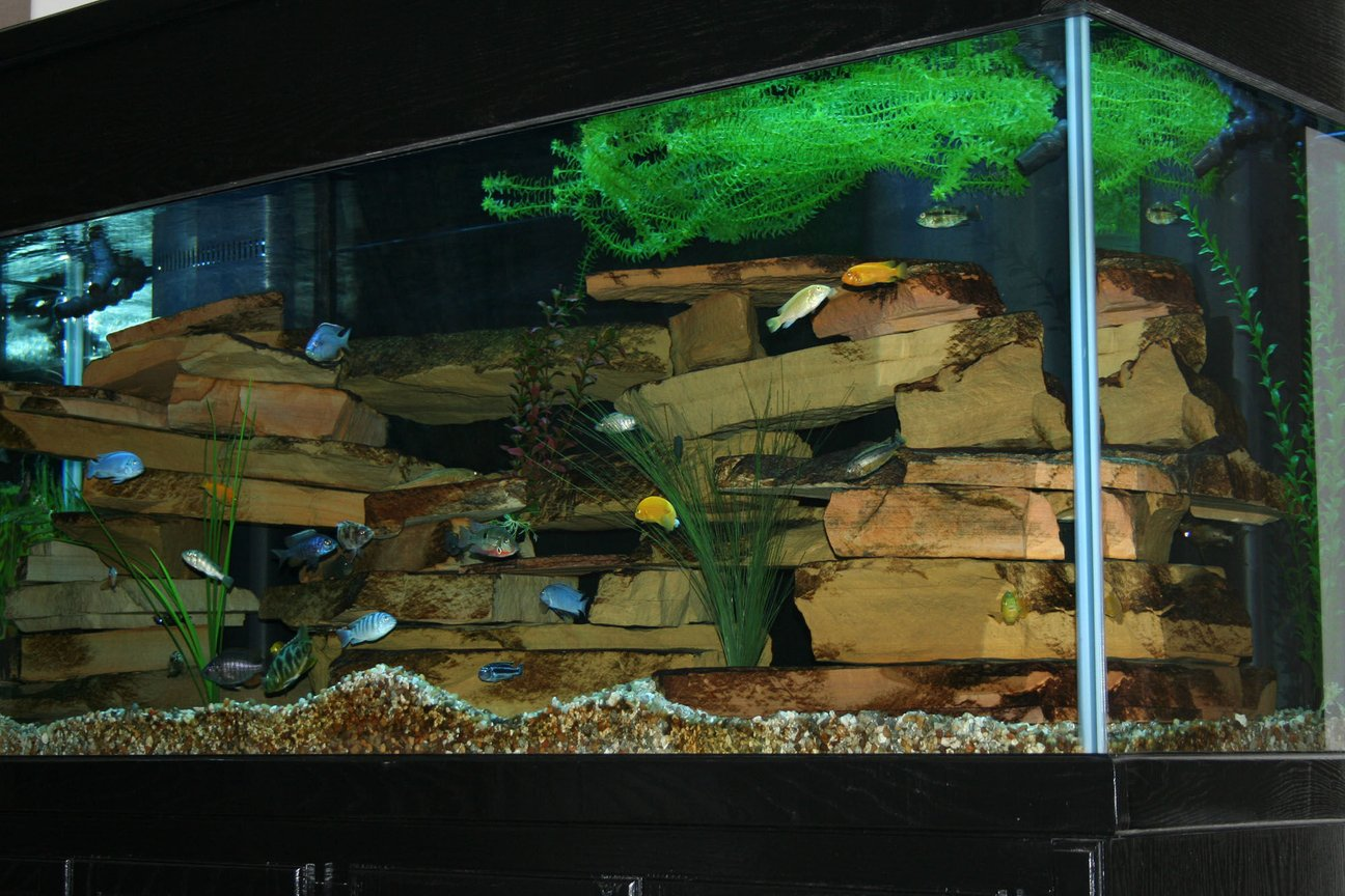 210 gallons freshwater fish tank (mostly fish and non-living decorations) - 210 Gallon Cichlid Tank