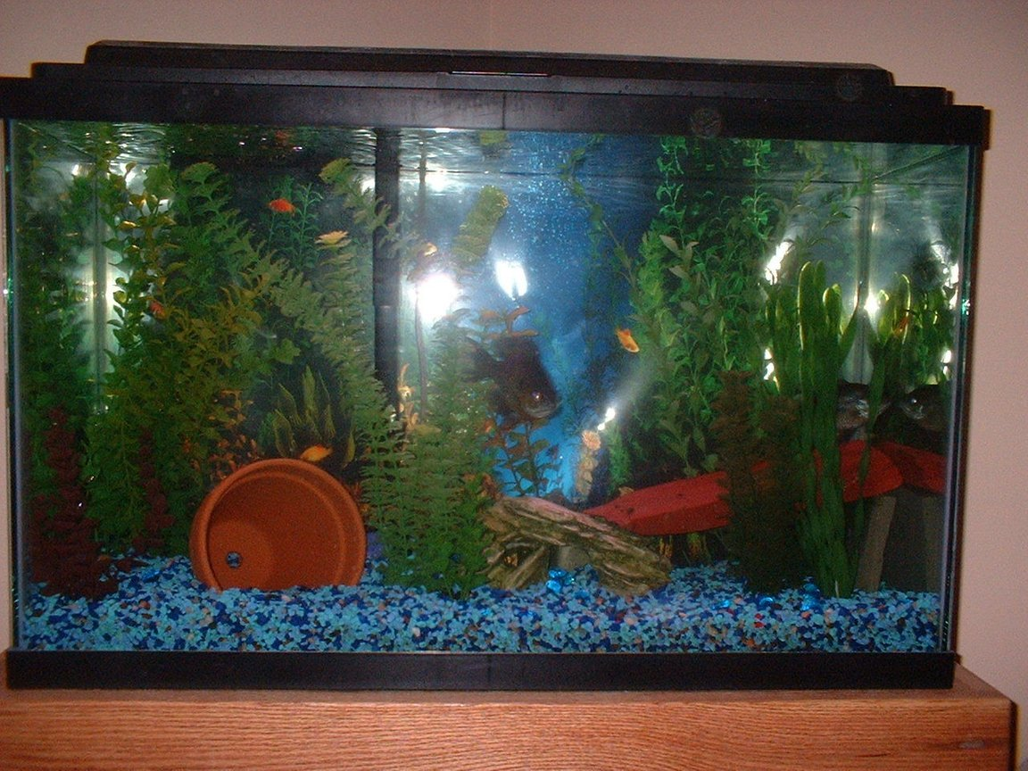 55 gallons freshwater fish tank (mostly fish and non-living decorations) - Blue GIll