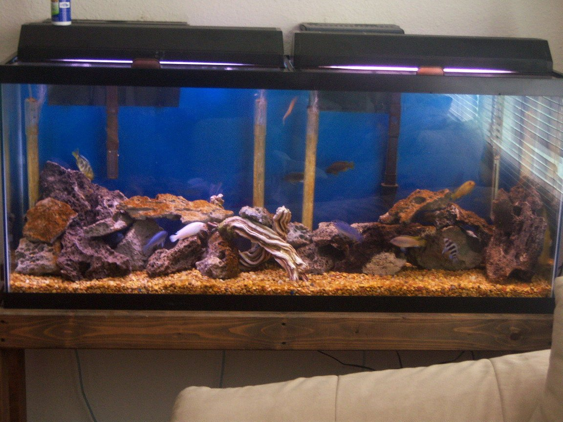 55 gallons freshwater fish tank (mostly fish and non-living decorations) - new setup