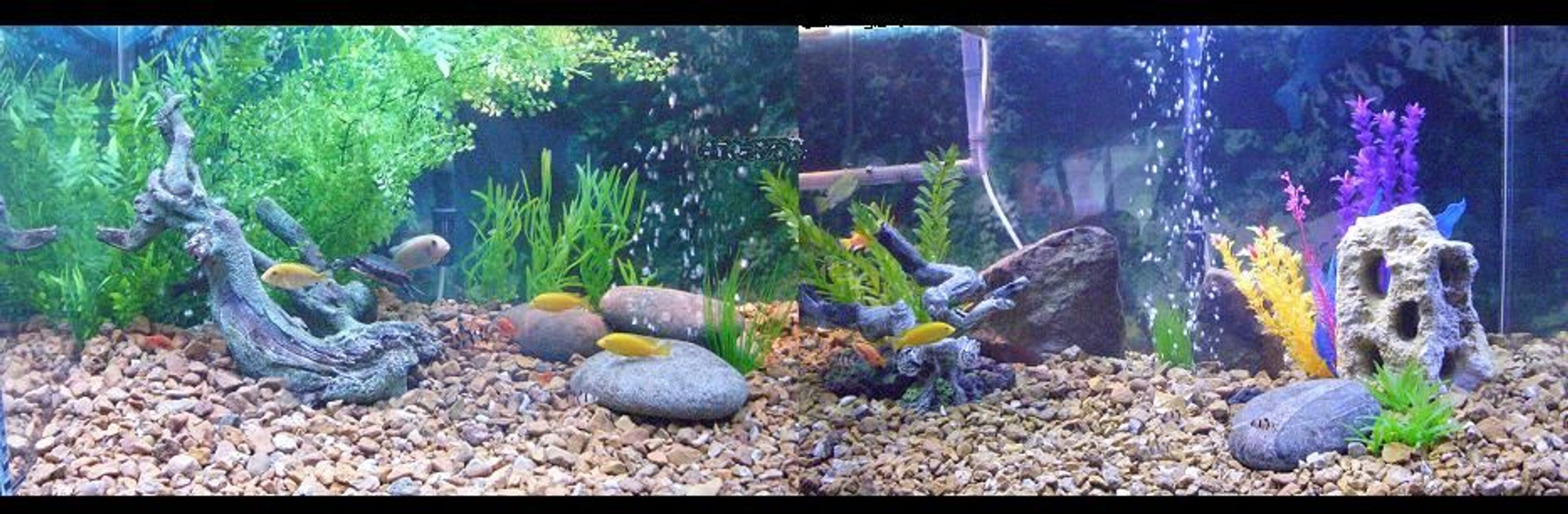 225 gallons freshwater fish tank (mostly fish and non-living decorations) - 225 gallon fish/turtle tank
