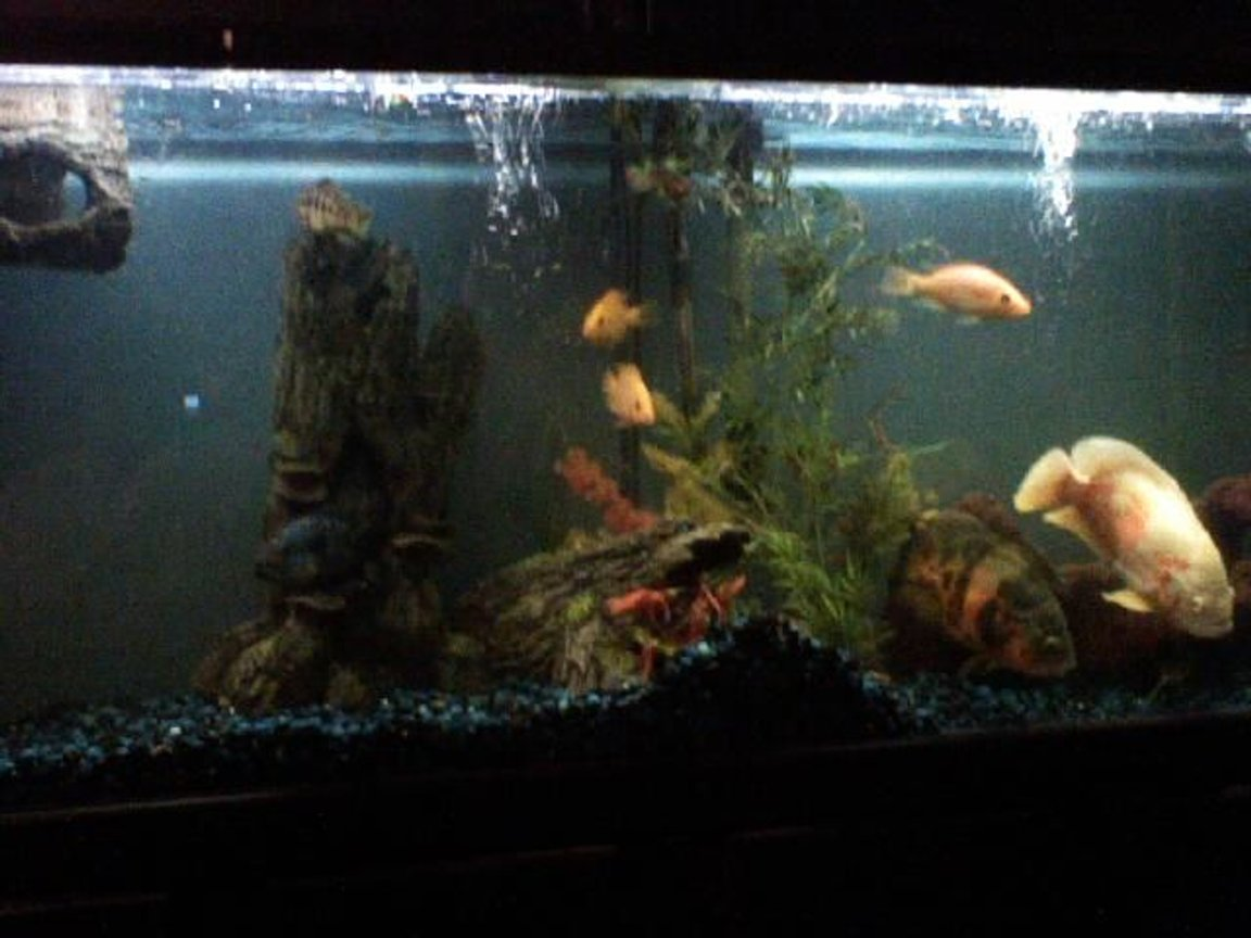 85 gallons freshwater fish tank (mostly fish and non-living decorations) - my 85 gal