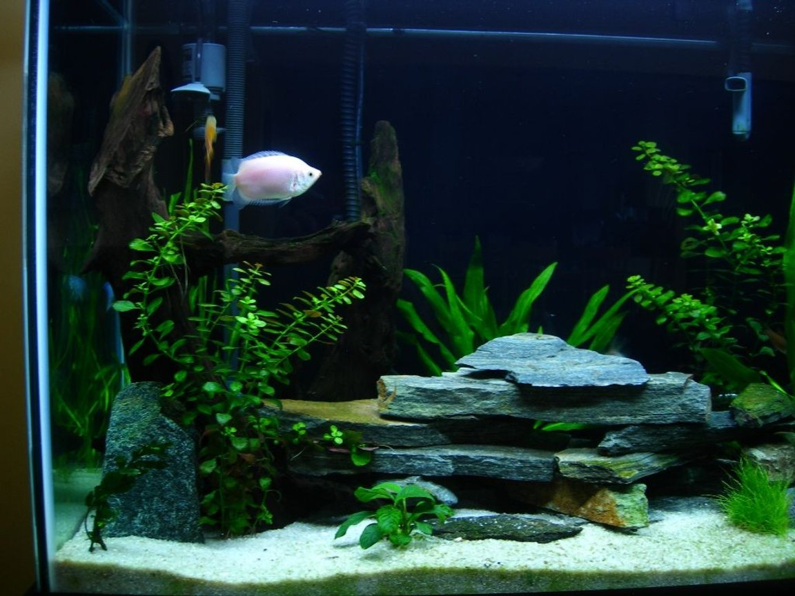 70 gallons freshwater fish tank (mostly fish and non-living decorations) - 3 months old