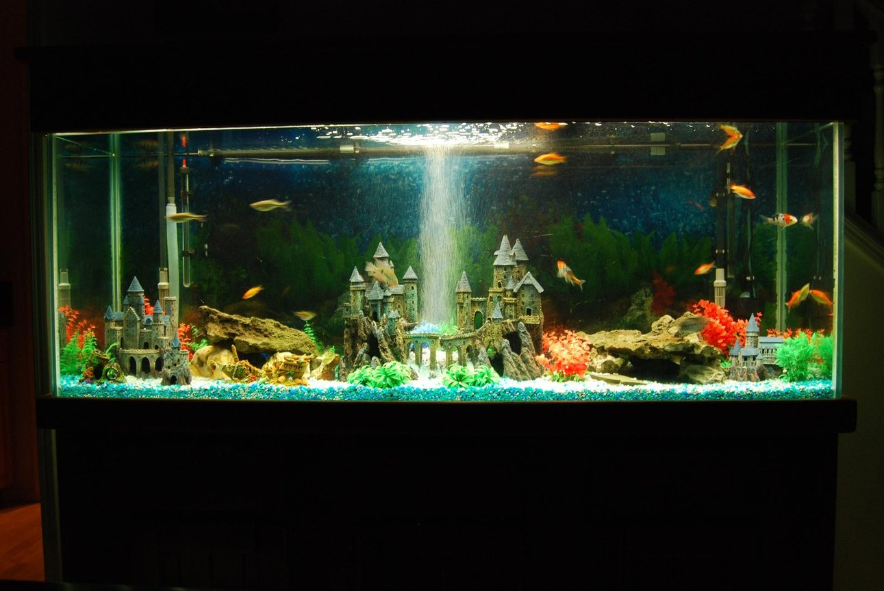 180 gallons freshwater fish tank (mostly fish and non-living decorations) - Castle decorations like the way kids wanted.
