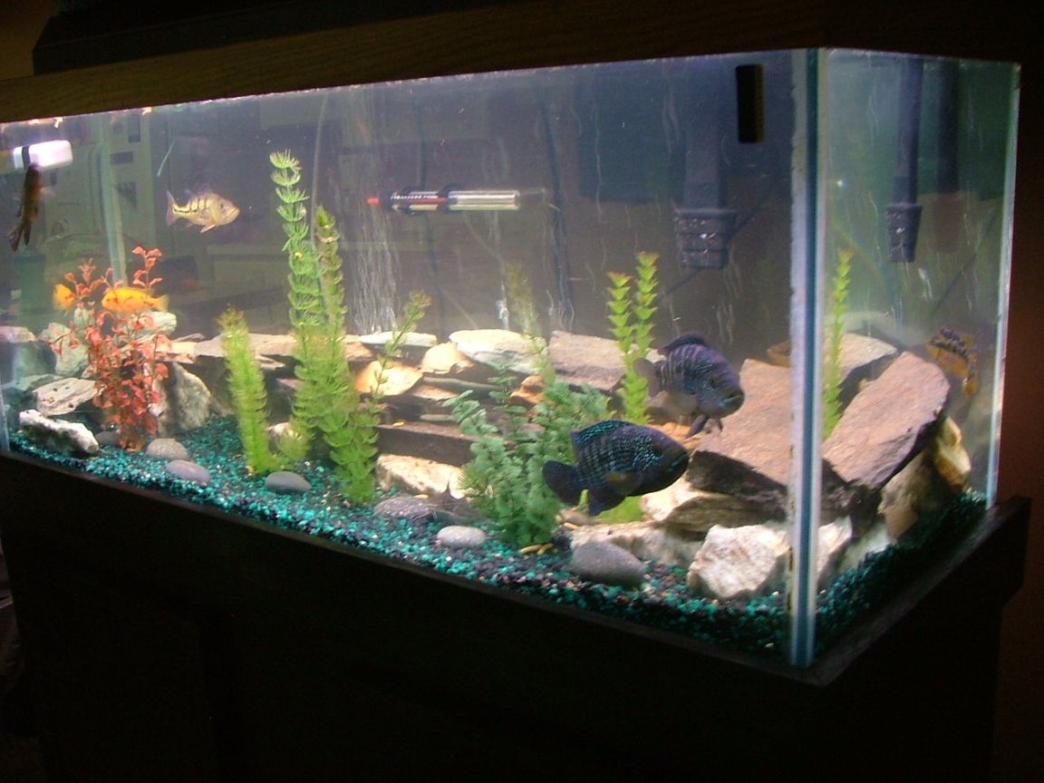 55 gallons freshwater fish tank (mostly fish and non-living decorations) - 75 gallon freshwater ,