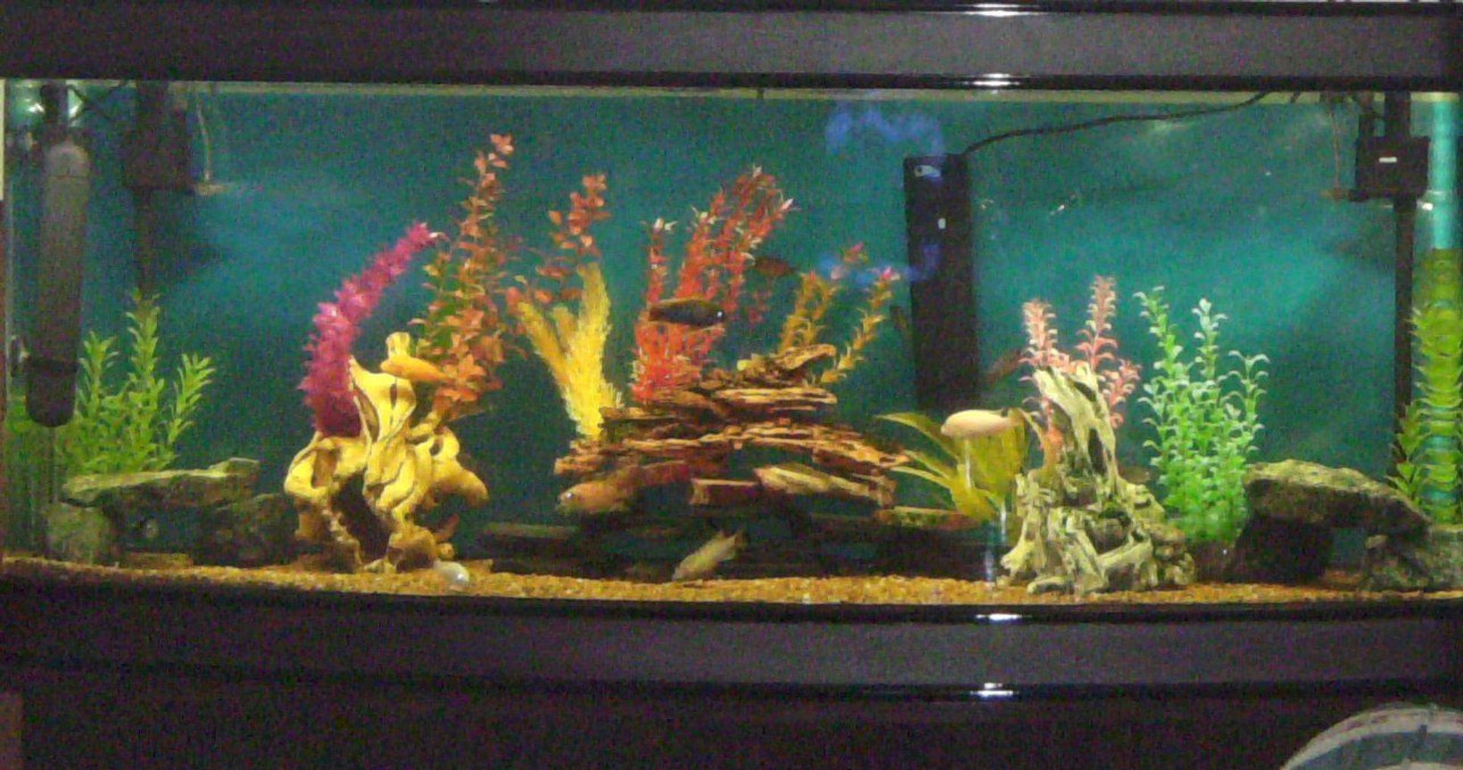 180 gallons freshwater fish tank (mostly fish and non-living decorations) - My African Tank