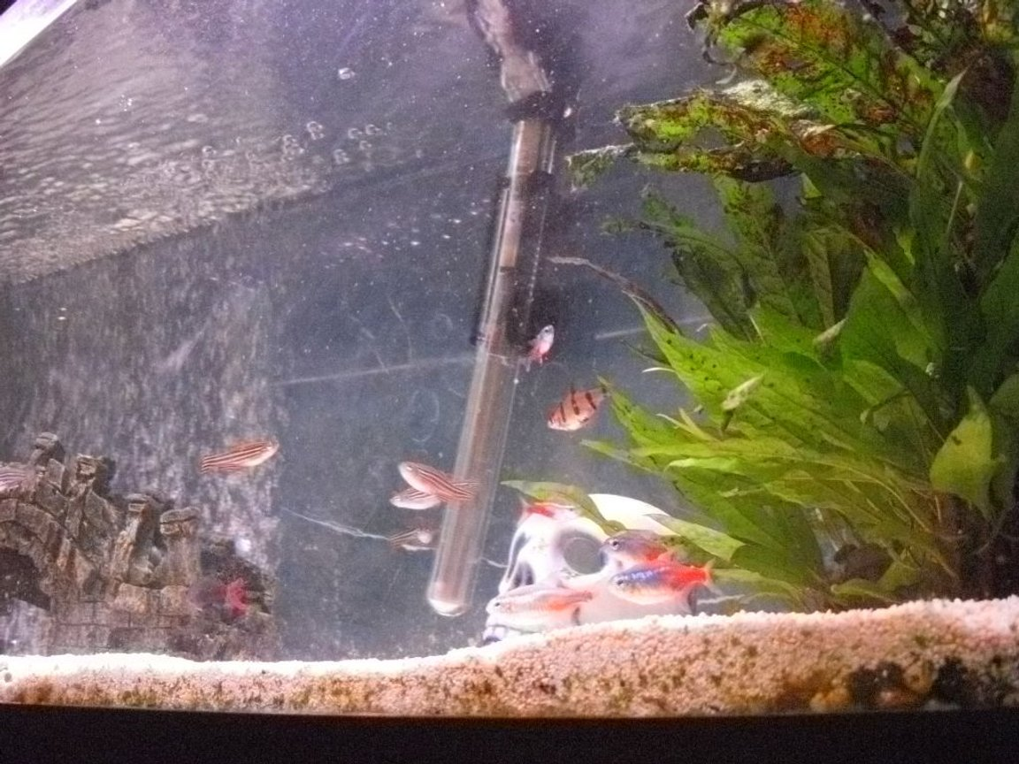 4 gallons freshwater fish tank (mostly fish and non-living decorations) - some fish
