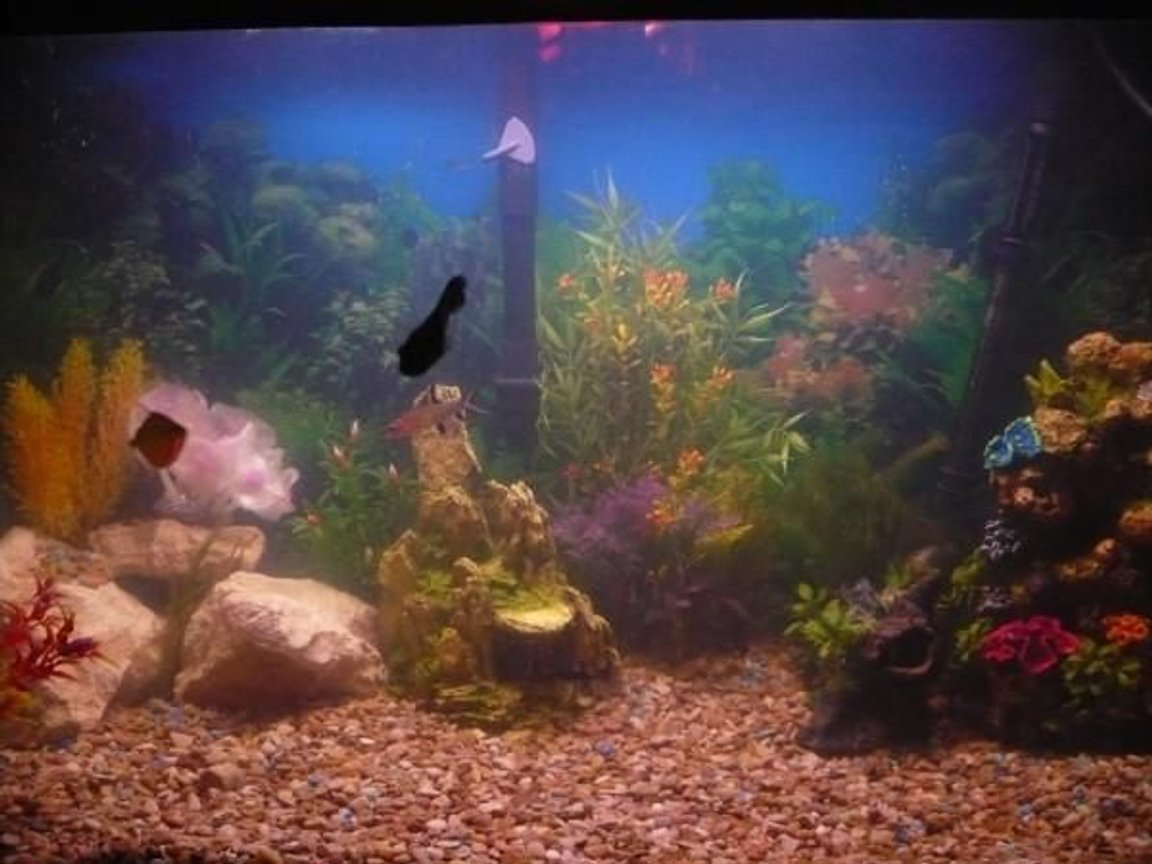 50 gallons freshwater fish tank (mostly fish and non-living decorations) - Most of my fish are hiding you really have to look