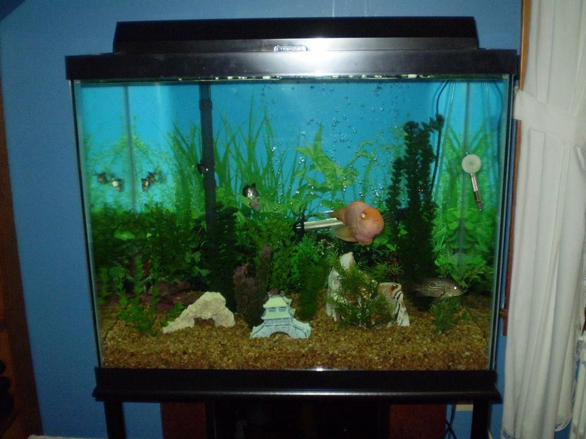 56 gallons freshwater fish tank (mostly fish and non-living decorations) - circa summer