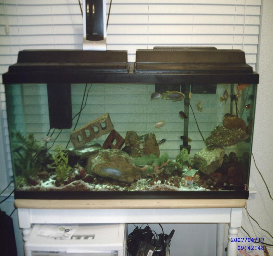55 gallons freshwater fish tank (mostly fish and non-living decorations) - 55 african - malawi/tanginikan