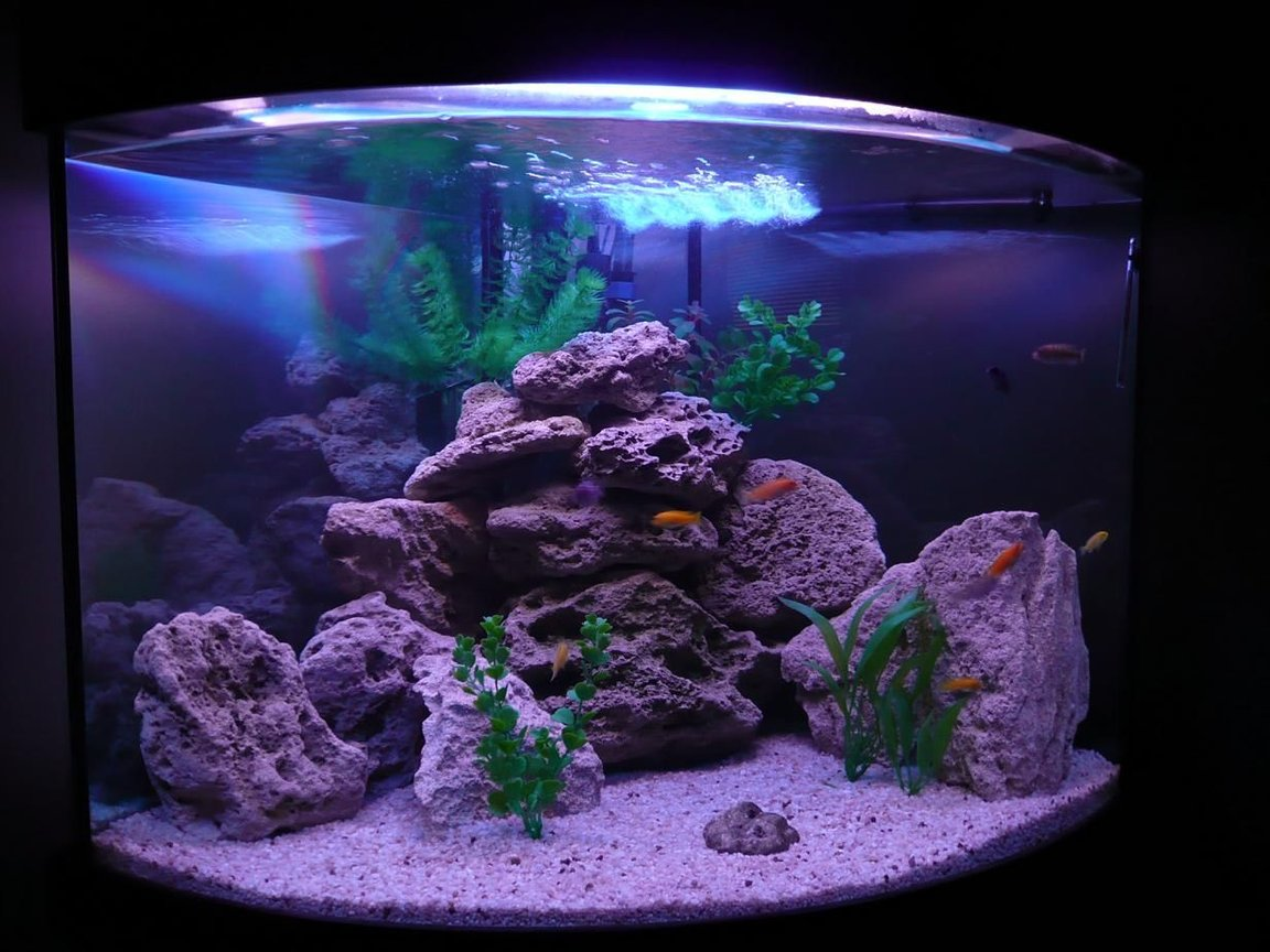 50 gallons freshwater fish tank (mostly fish and non-living decorations) - Mbuna Set Up