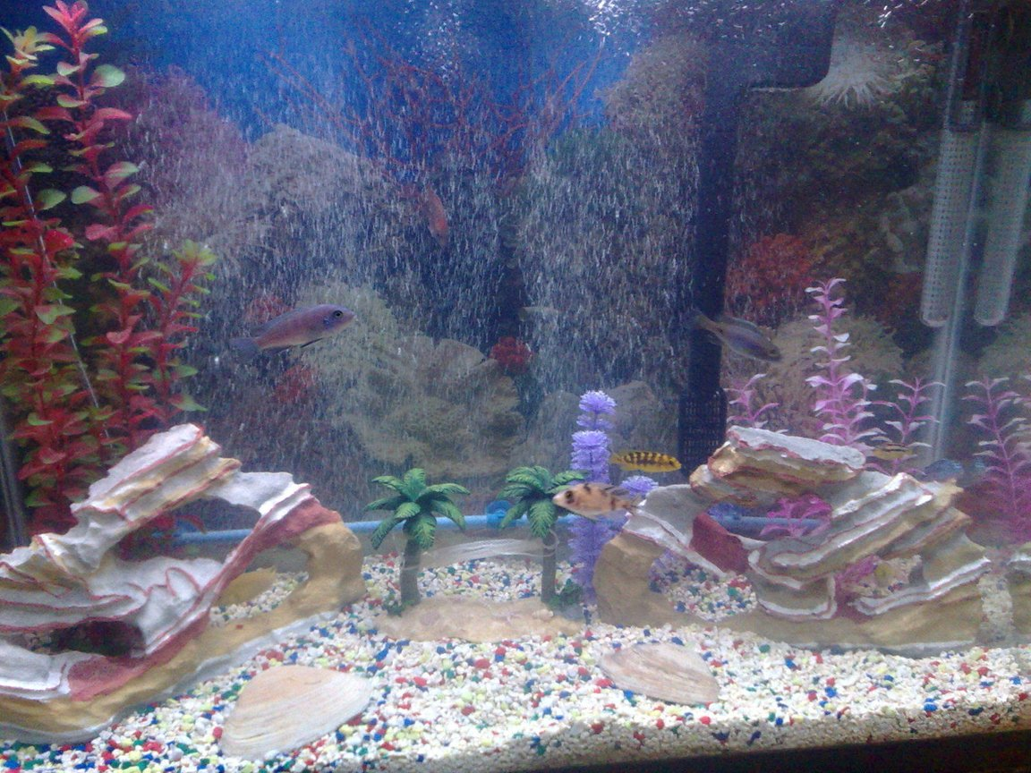 37 gallons freshwater fish tank (mostly fish and non-living decorations) - I am new at this!
