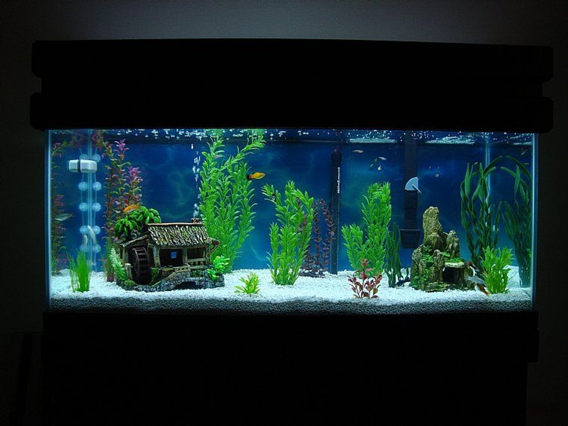 75 gallons freshwater fish tank (mostly fish and non-living decorations) - First Tank