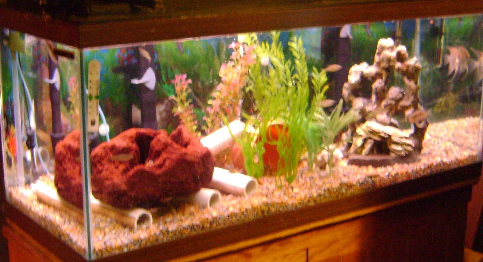 75 gallons freshwater fish tank (mostly fish and non-living decorations) - full tank view