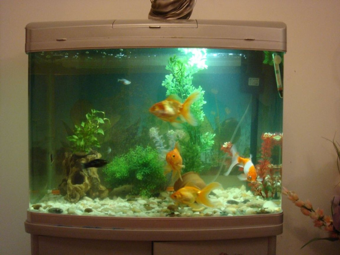 20 gallons freshwater fish tank (mostly fish and non-living decorations) - It is 20 gal tank of total 3 gold fishes and one comment fish. ost of plants are planstic ,