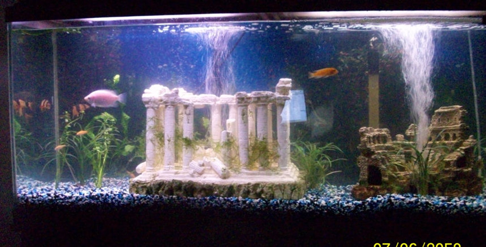 55 gallons freshwater fish tank (mostly fish and non-living decorations) - New tank