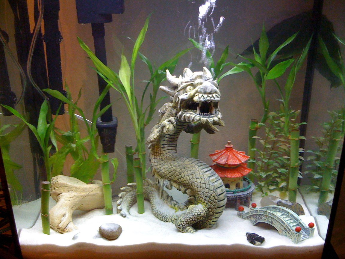 15 gallons freshwater fish tank (mostly fish and non-living decorations) - Just added sand..
