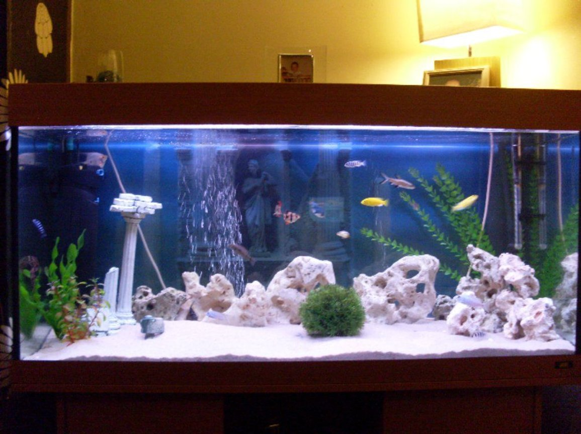 180 gallons freshwater fish tank (mostly fish and non-living decorations) - mixed malawi