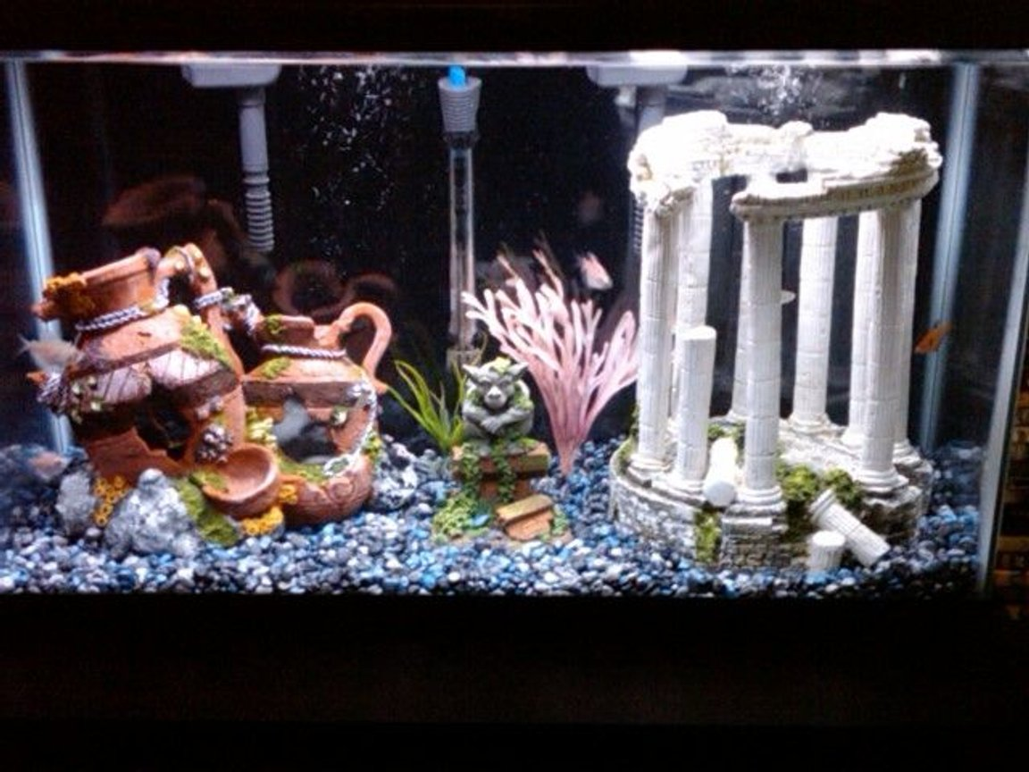 30 gallons freshwater fish tank (mostly fish and non-living decorations) - Freshwater tank still in the works...