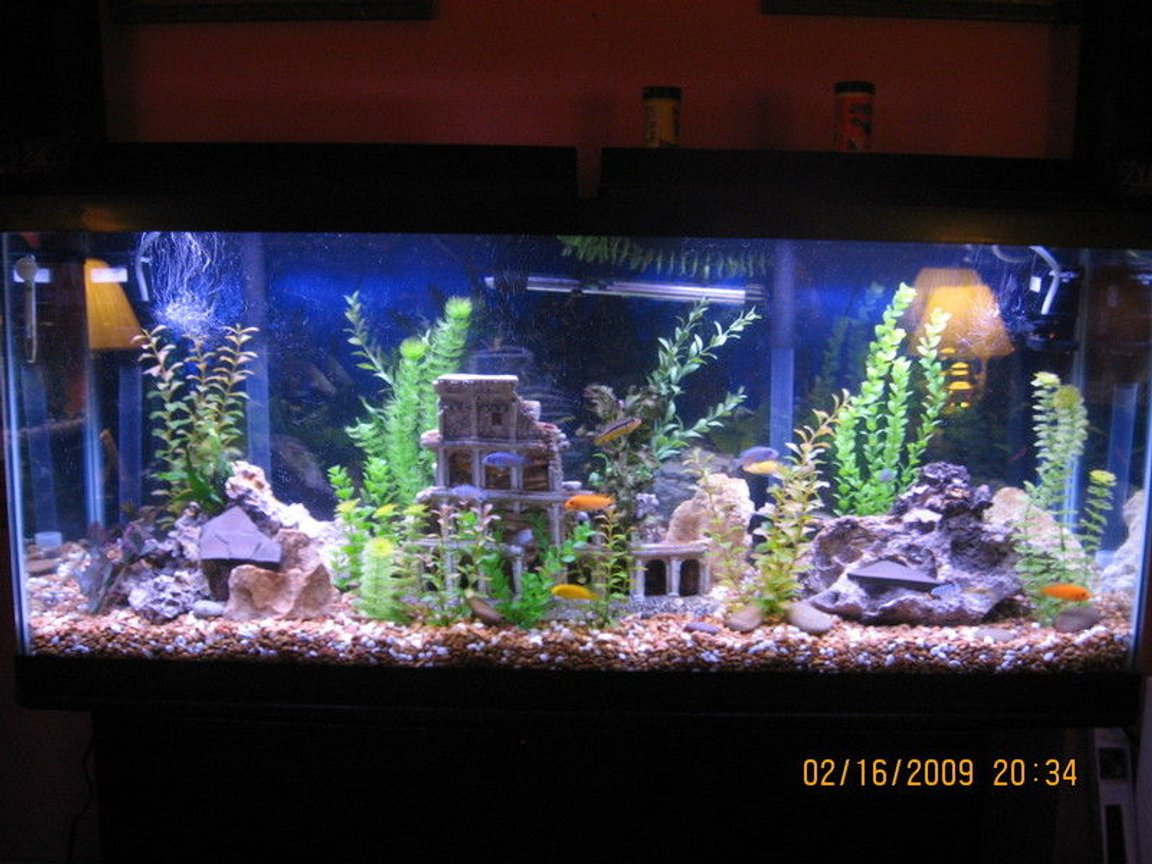 55 gallons freshwater fish tank (mostly fish and non-living decorations) - 55 gallon mixed malawi cichlids