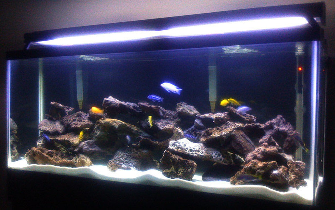 55 gallons freshwater fish tank (mostly fish and non-living decorations) - Malawi Lace Tank