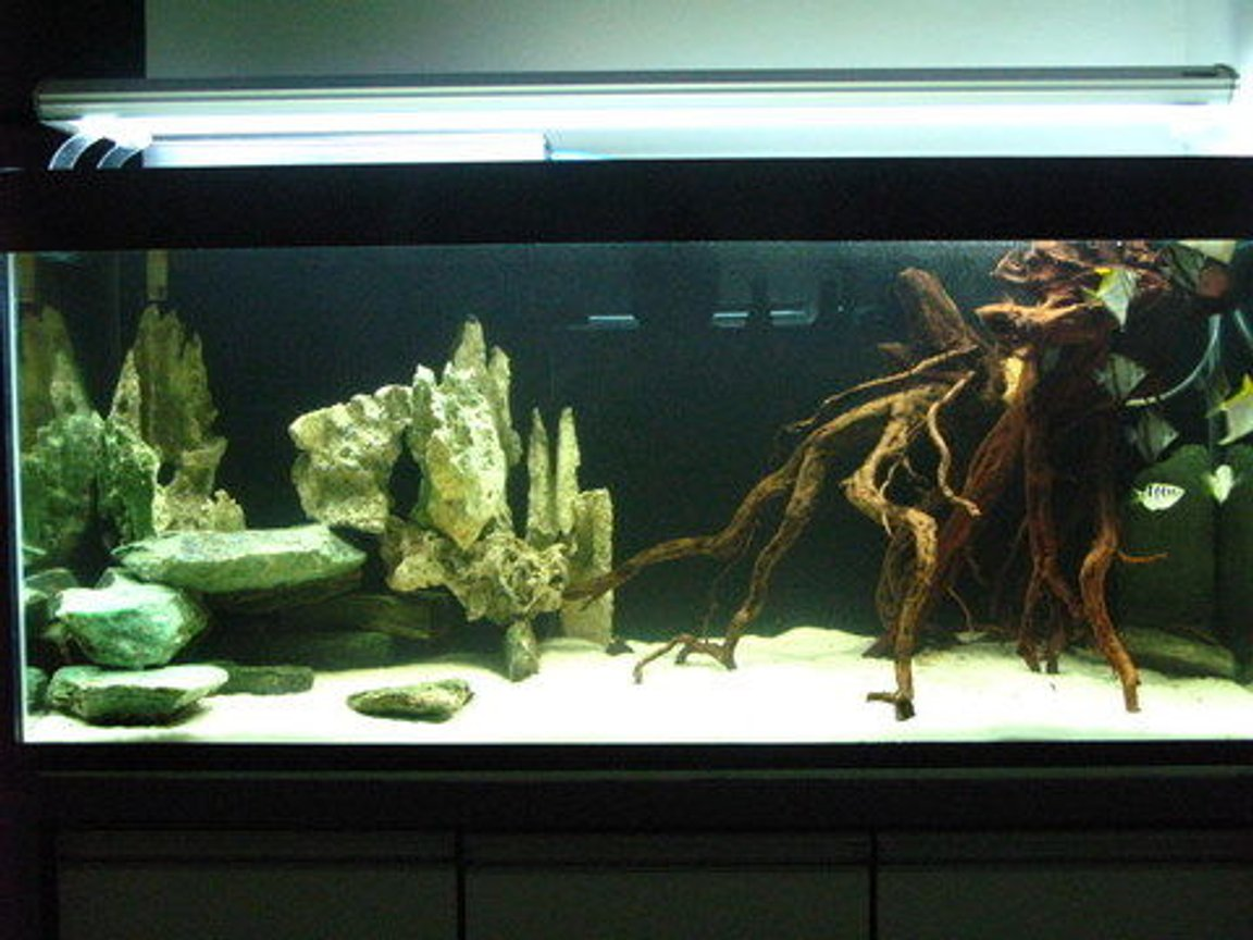 75 gallons freshwater fish tank (mostly fish and non-living decorations) - Freshwater Tank with all natural real materials used.