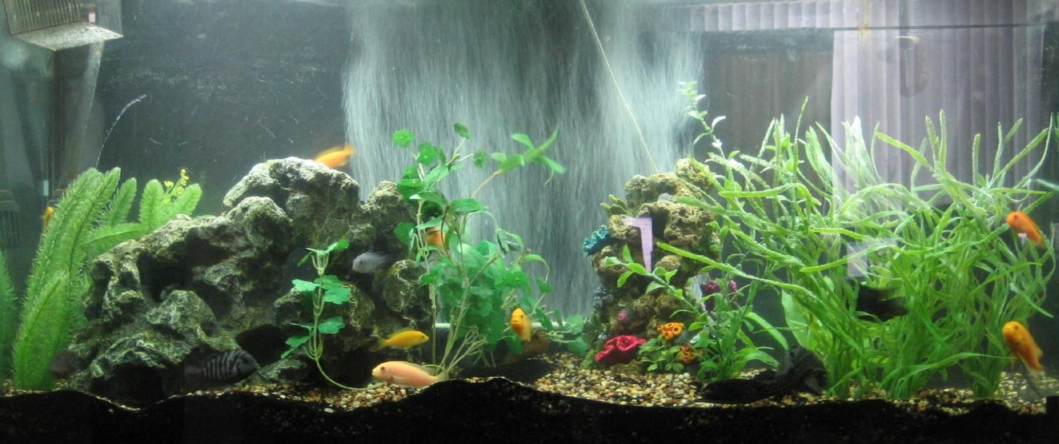 60 gallons freshwater fish tank (mostly fish and non-living decorations) - Not the best in the world but hey, I love my fish tank