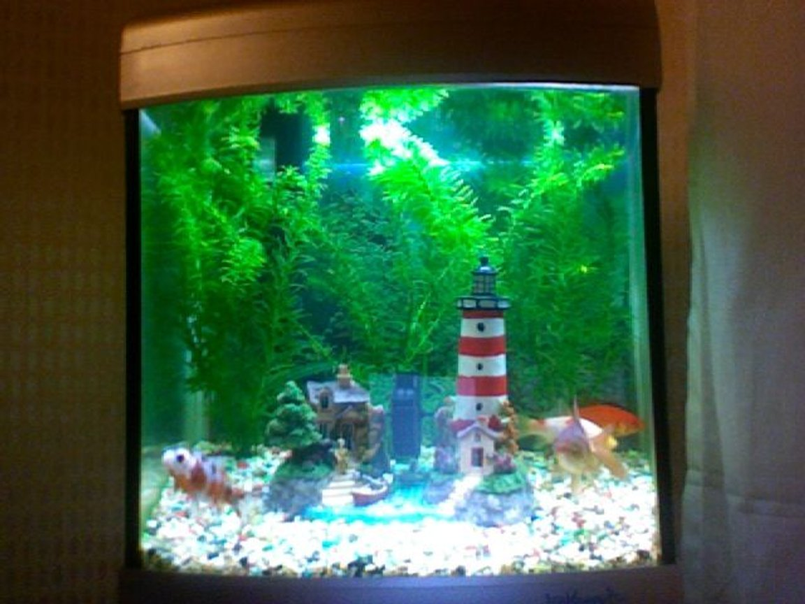 7 gallons freshwater fish tank (mostly fish and non-living decorations) - picture 2