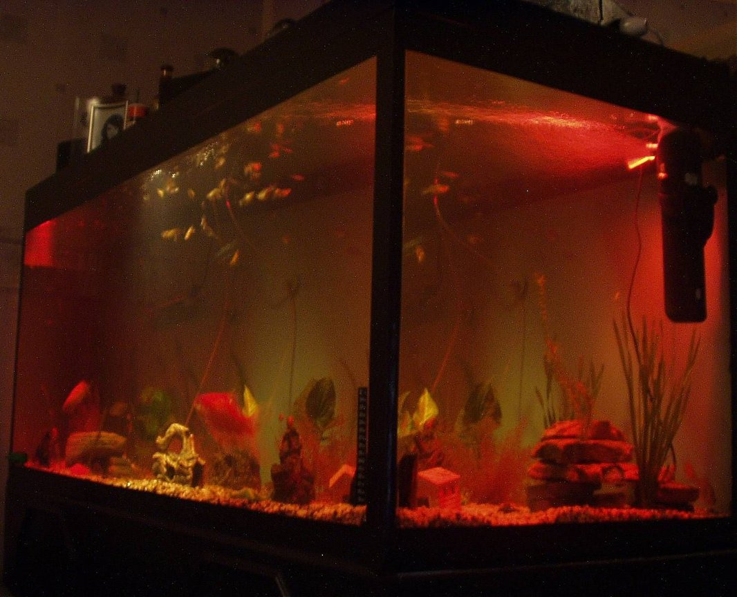 240 gallons freshwater fish tank (mostly fish and non-living decorations) - our 5ft fish tank at night