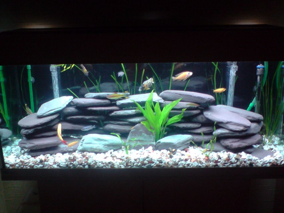 70 gallons freshwater fish tank (mostly fish and non-living decorations) - Malawi fish tank
