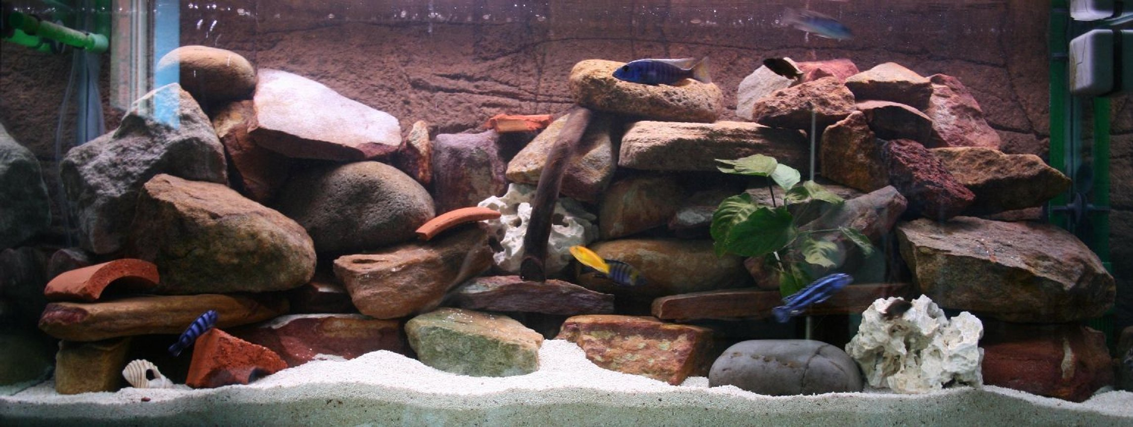 50 gallons freshwater fish tank (mostly fish and non-living decorations) - My four-foot African community set-up.
