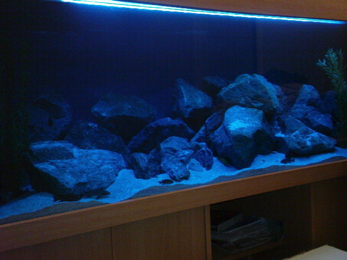 180 gallons freshwater fish tank (mostly fish and non-living decorations) - Rescape Mbuna tank