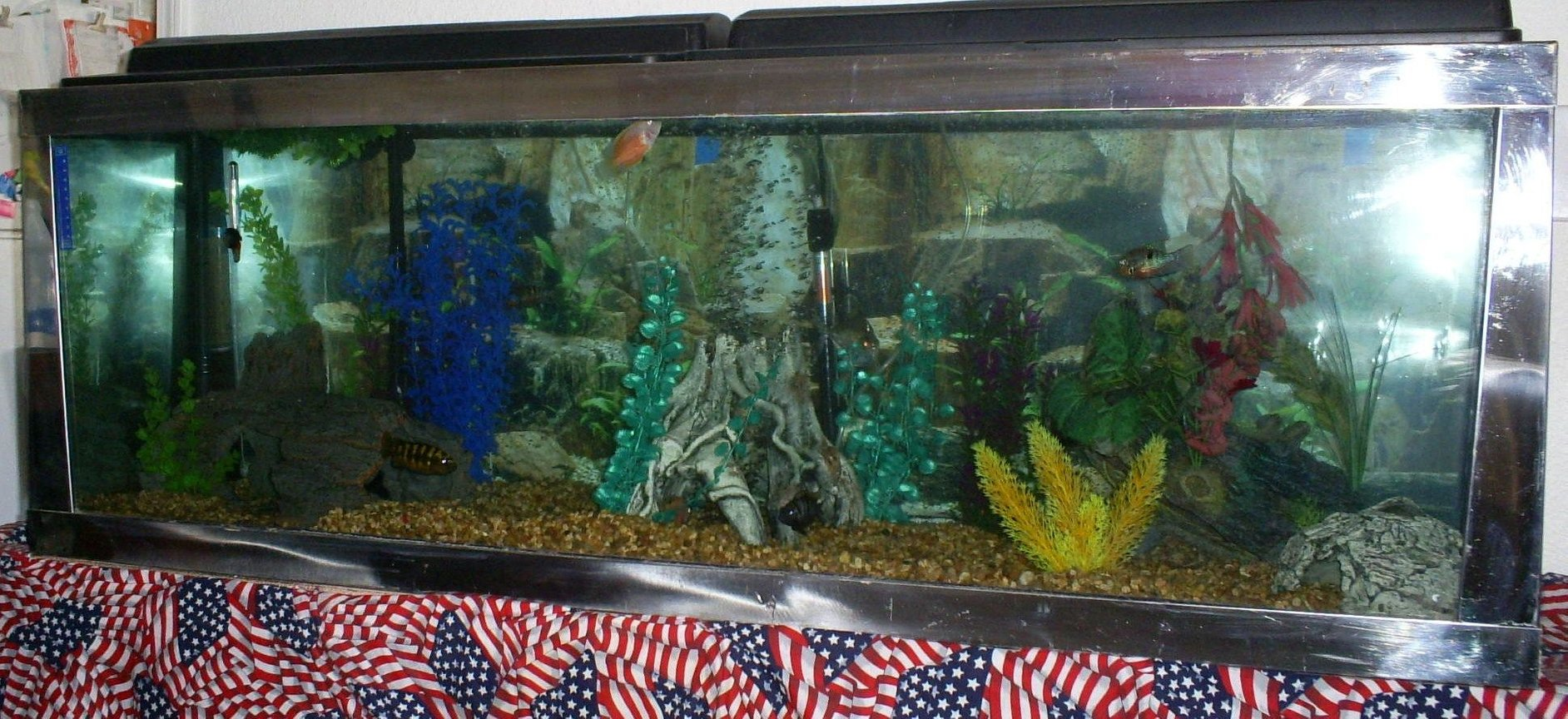 100 gallons freshwater fish tank (mostly fish and non-living decorations) - front of the tank