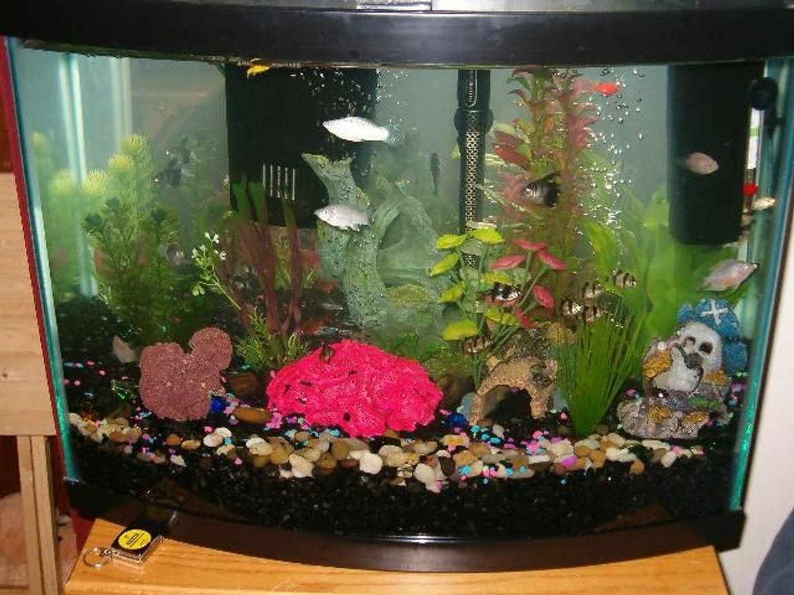 30 gallons freshwater fish tank (mostly fish and non-living decorations) - 30 gallon bowfront