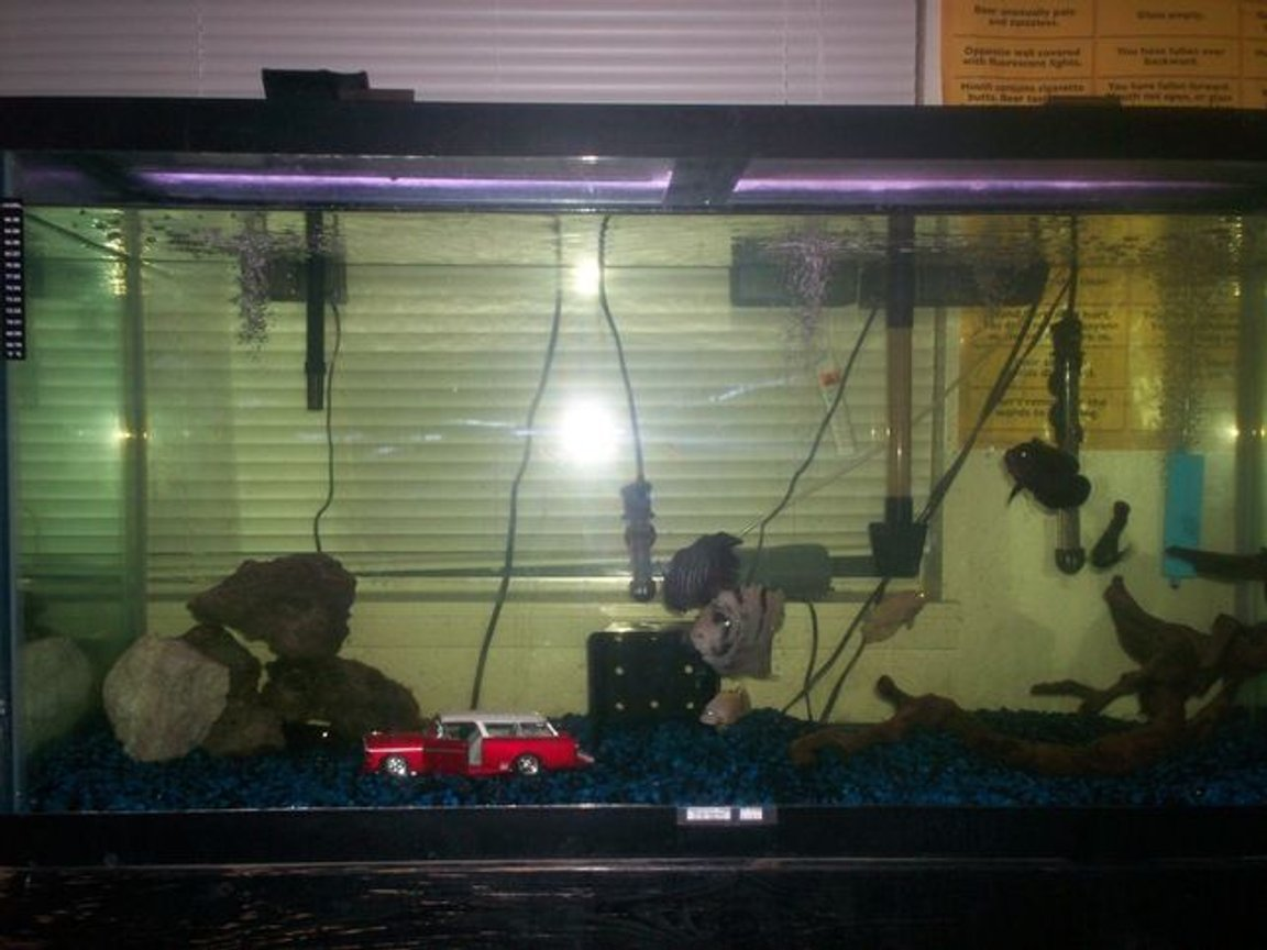 80 gallons freshwater fish tank (mostly fish and non-living decorations) - 80 Gal. tank