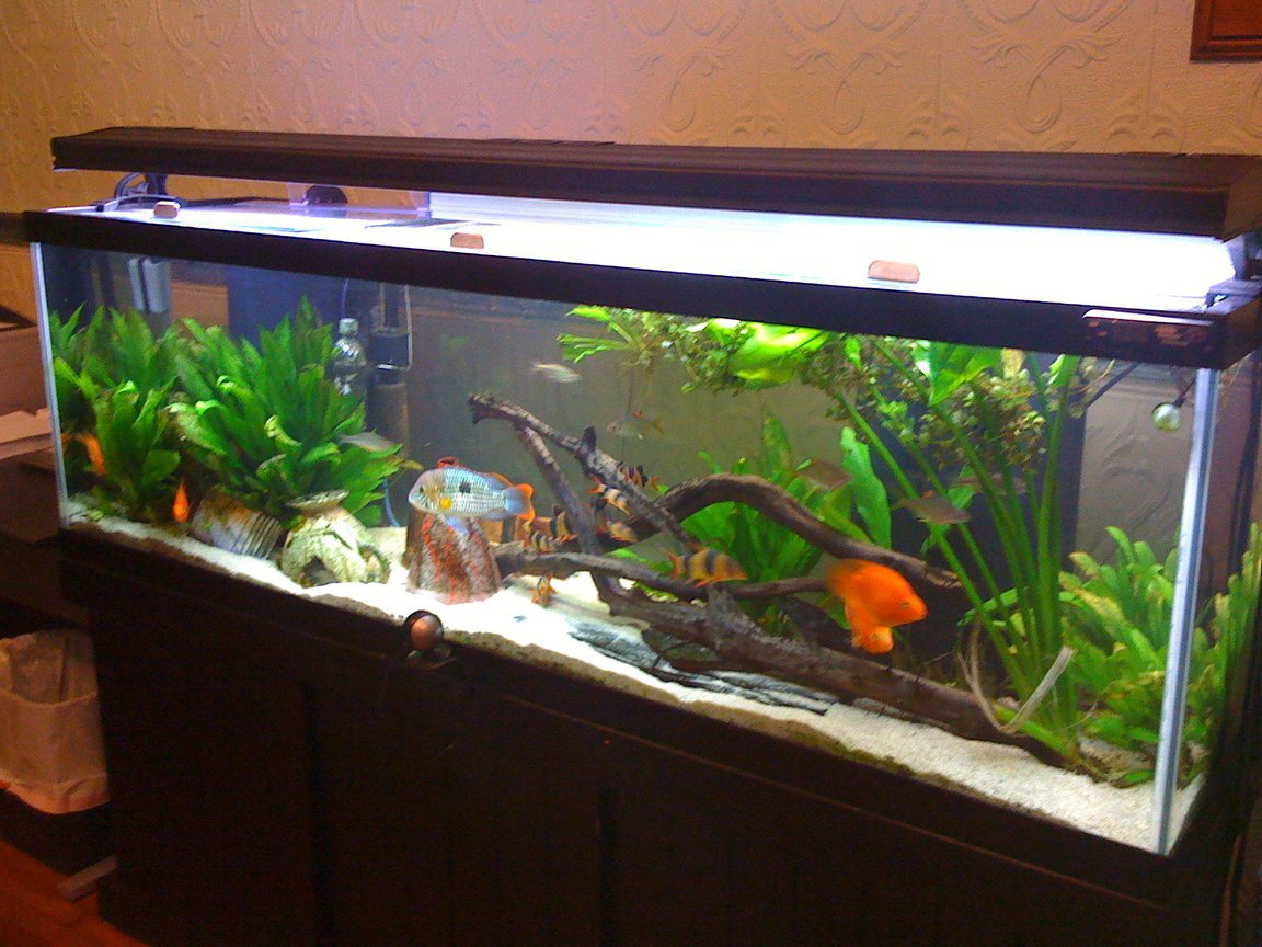 125 gallons freshwater fish tank (mostly fish and non-living decorations)
