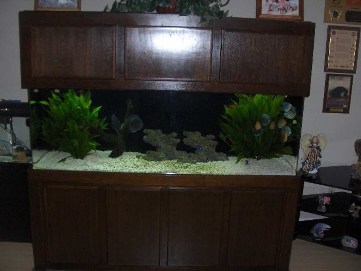 180 gallons freshwater fish tank (mostly fish and non-living decorations) - Here is the full tank.