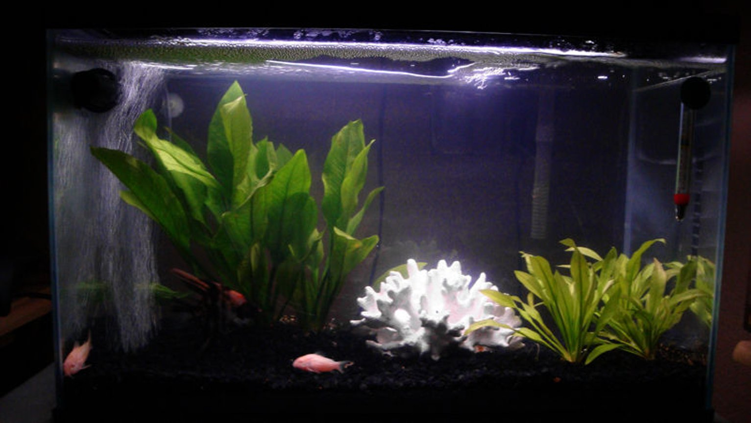 12 gallons freshwater fish tank (mostly fish and non-living decorations) - 12 gallon freshwater tank