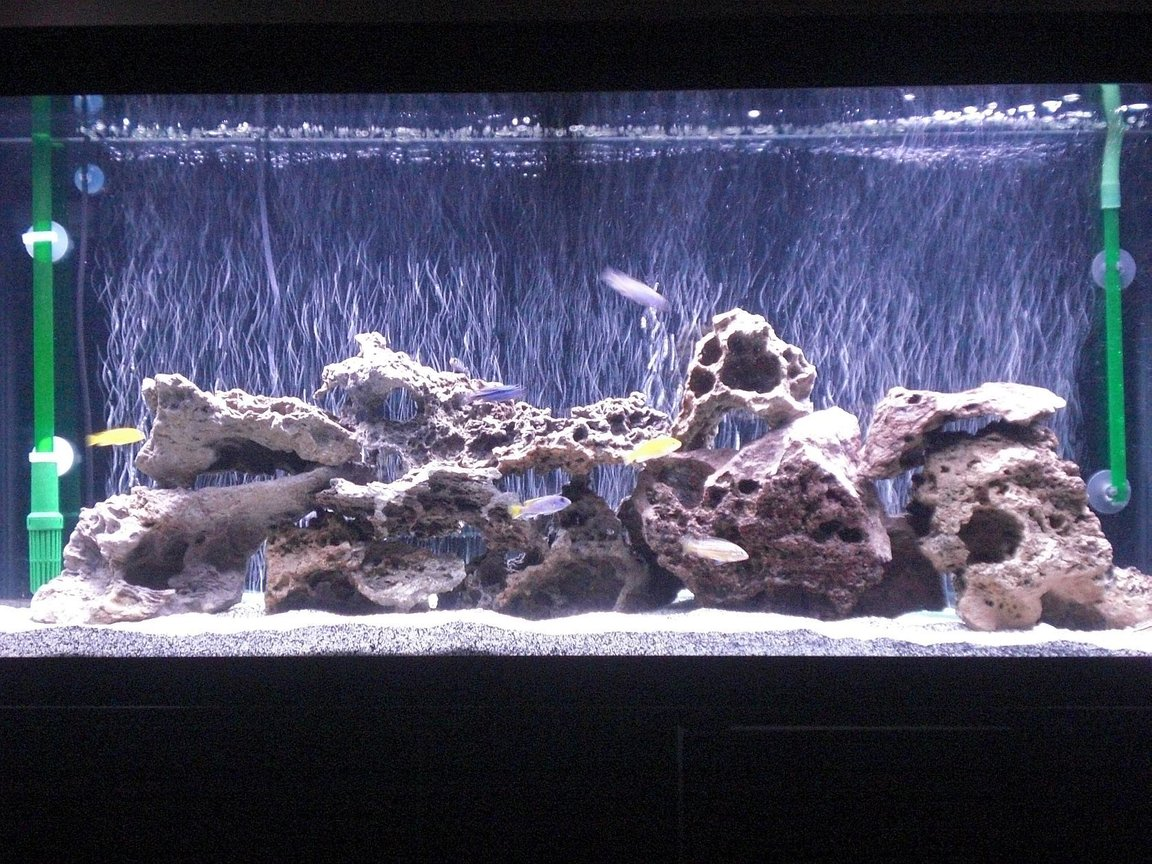 55 gallons freshwater fish tank (mostly fish and non-living decorations) - Update