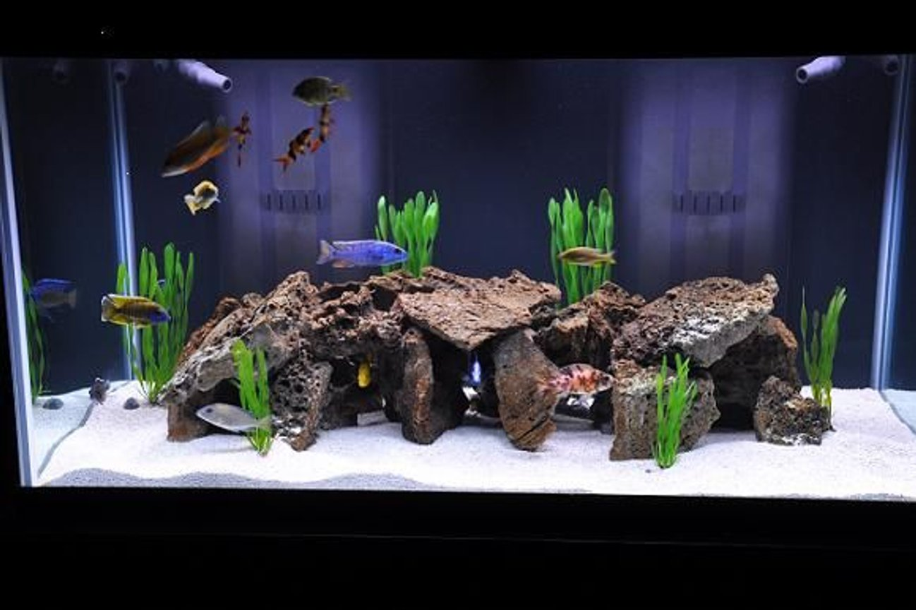 120 gallons freshwater fish tank (mostly fish and non-living decorations) - Freshwater tank in freshwater section