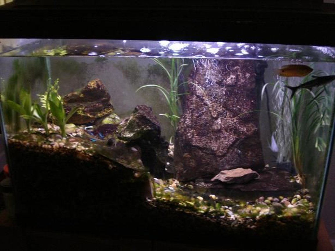 20 gallons freshwater fish tank (mostly fish and non-living decorations) - 05/07/09