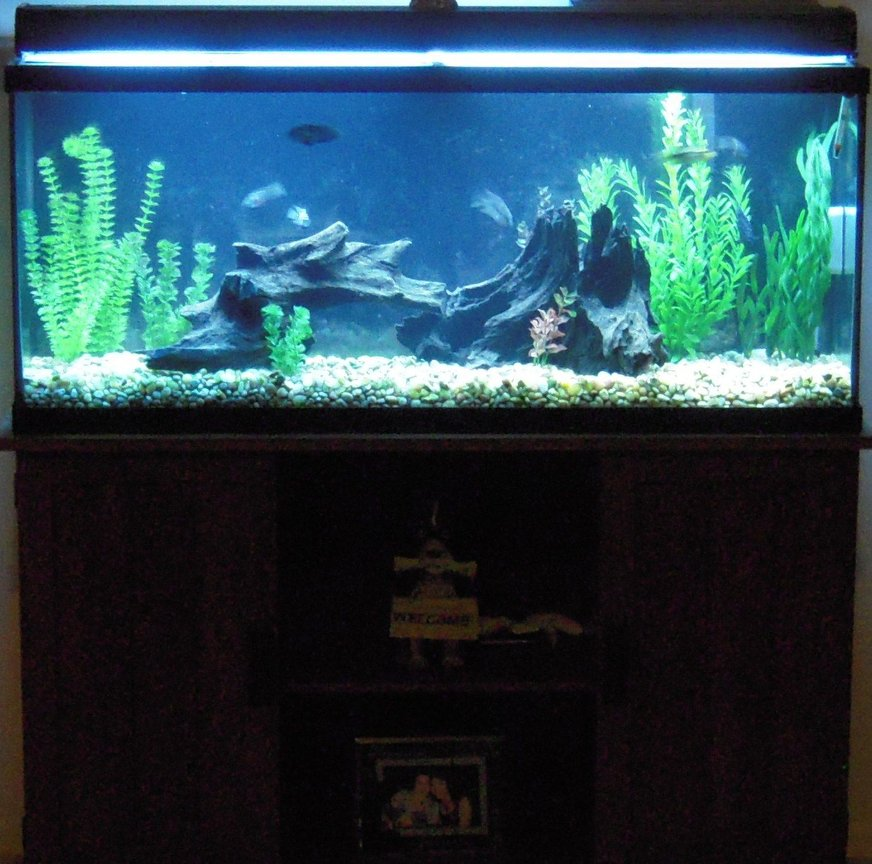 55 gallons freshwater fish tank (mostly fish and non-living decorations) - Freshwater Fish Tank