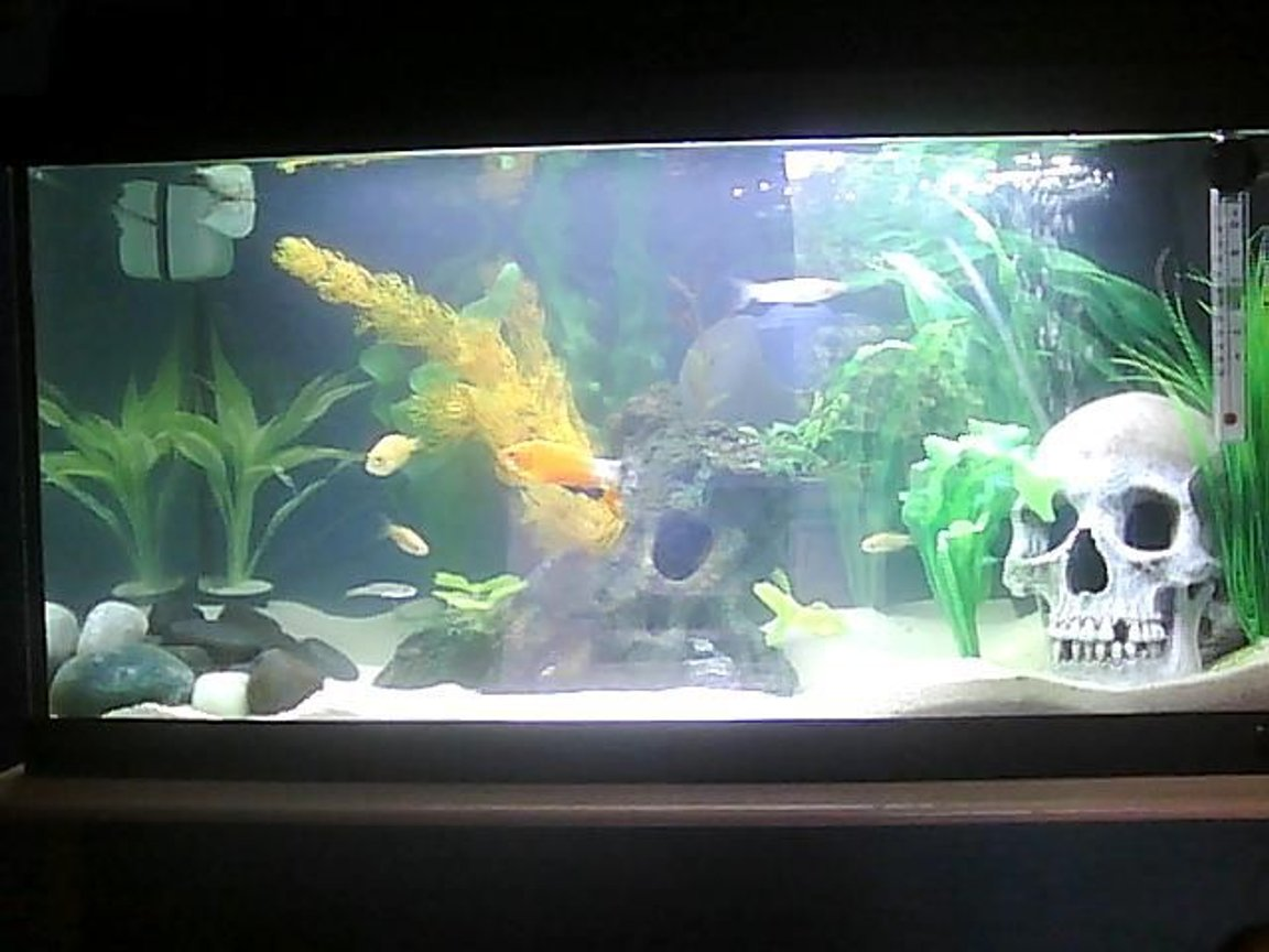 14 gallons freshwater fish tank (mostly fish and non-living decorations) - N/A