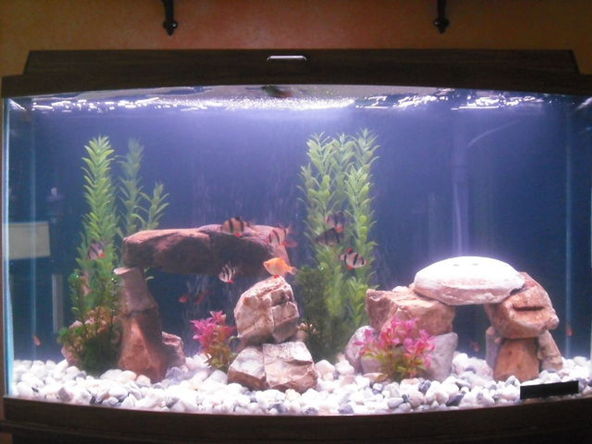 46 gallons freshwater fish tank (mostly fish and non-living decorations) - my 46 gallon bow front