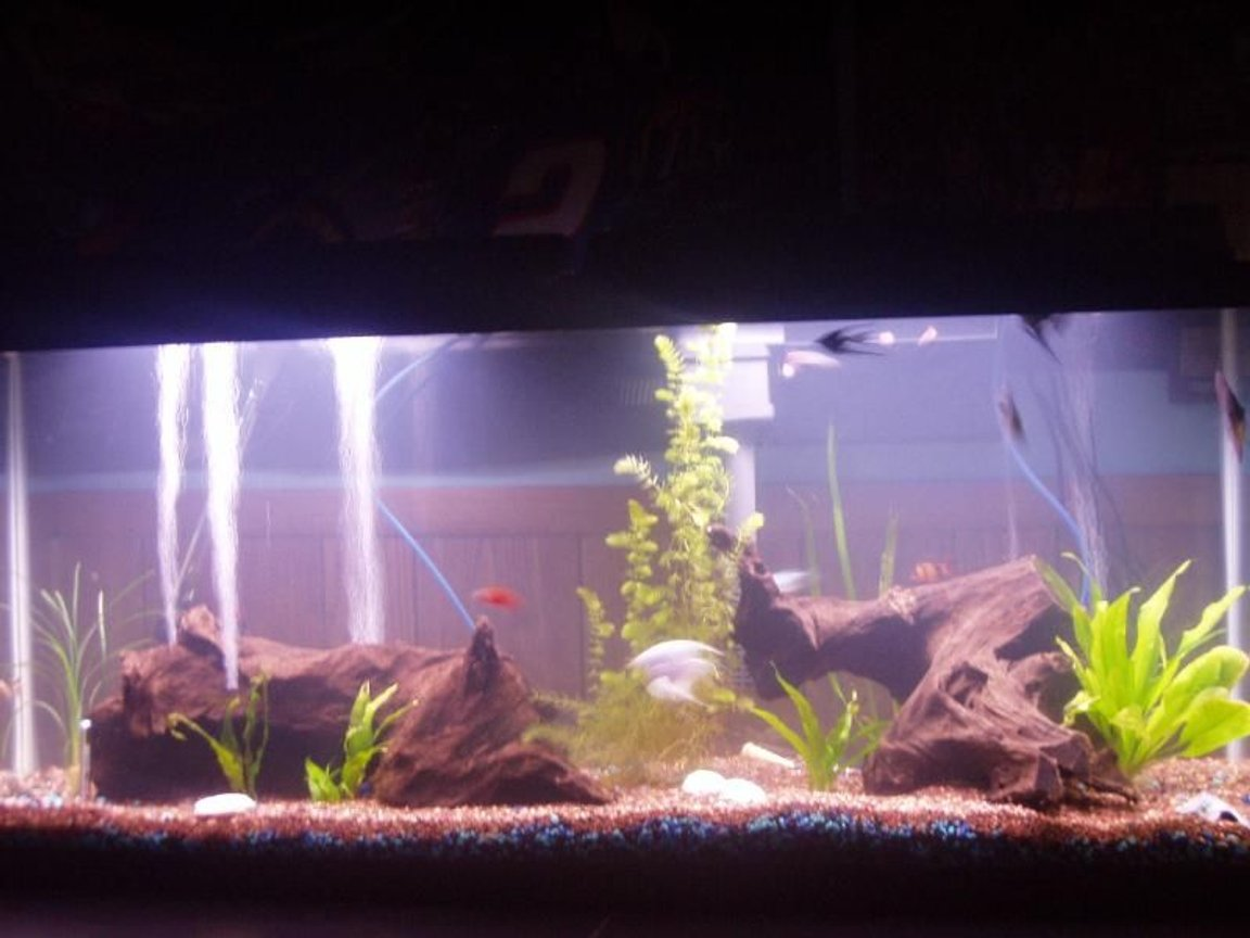 55 gallons freshwater fish tank (mostly fish and non-living decorations) - 55g freshwater