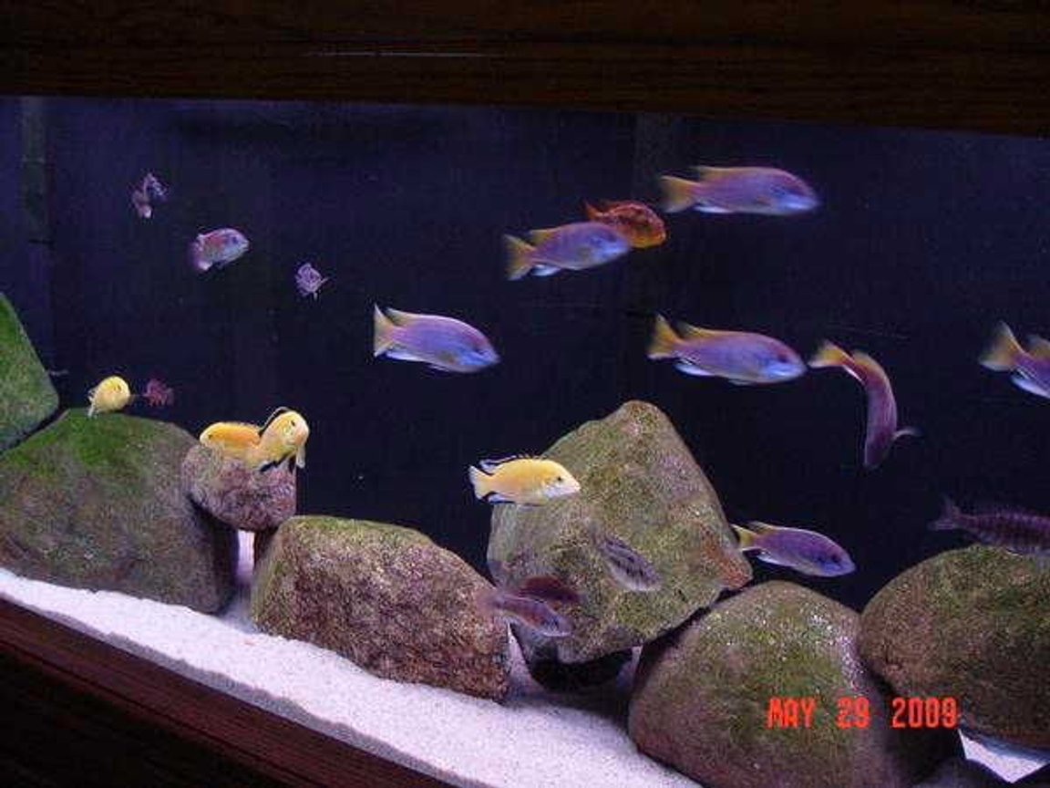 180 gallons freshwater fish tank (mostly fish and non-living decorations) - CLOSEUP