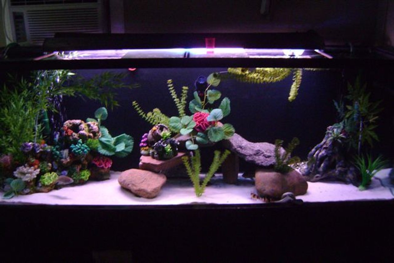 125 gallons freshwater fish tank (mostly fish and non-living decorations) - 125 gal soft white lighting