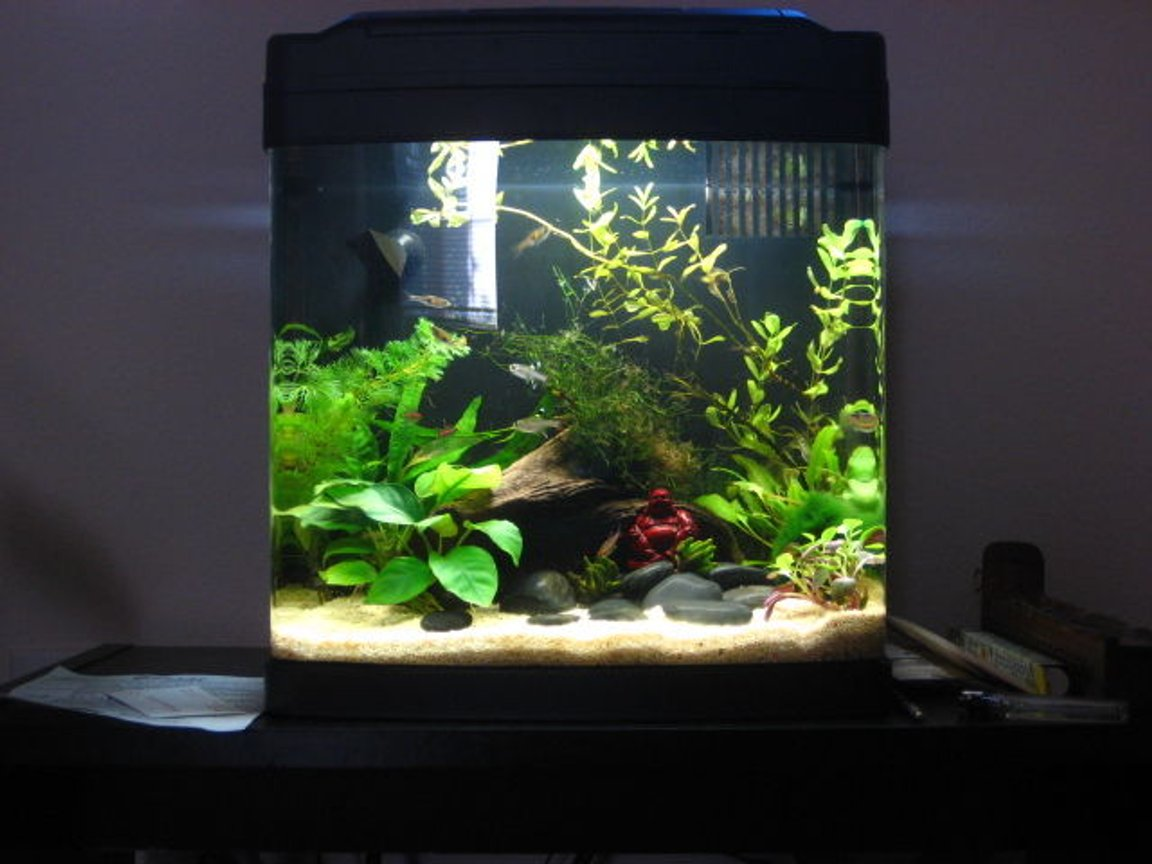 8 gallons freshwater fish tank (mostly fish and non-living decorations) - An older pic. I now use black flourite gravel. This was before I had the blackbeard algae infestation.
