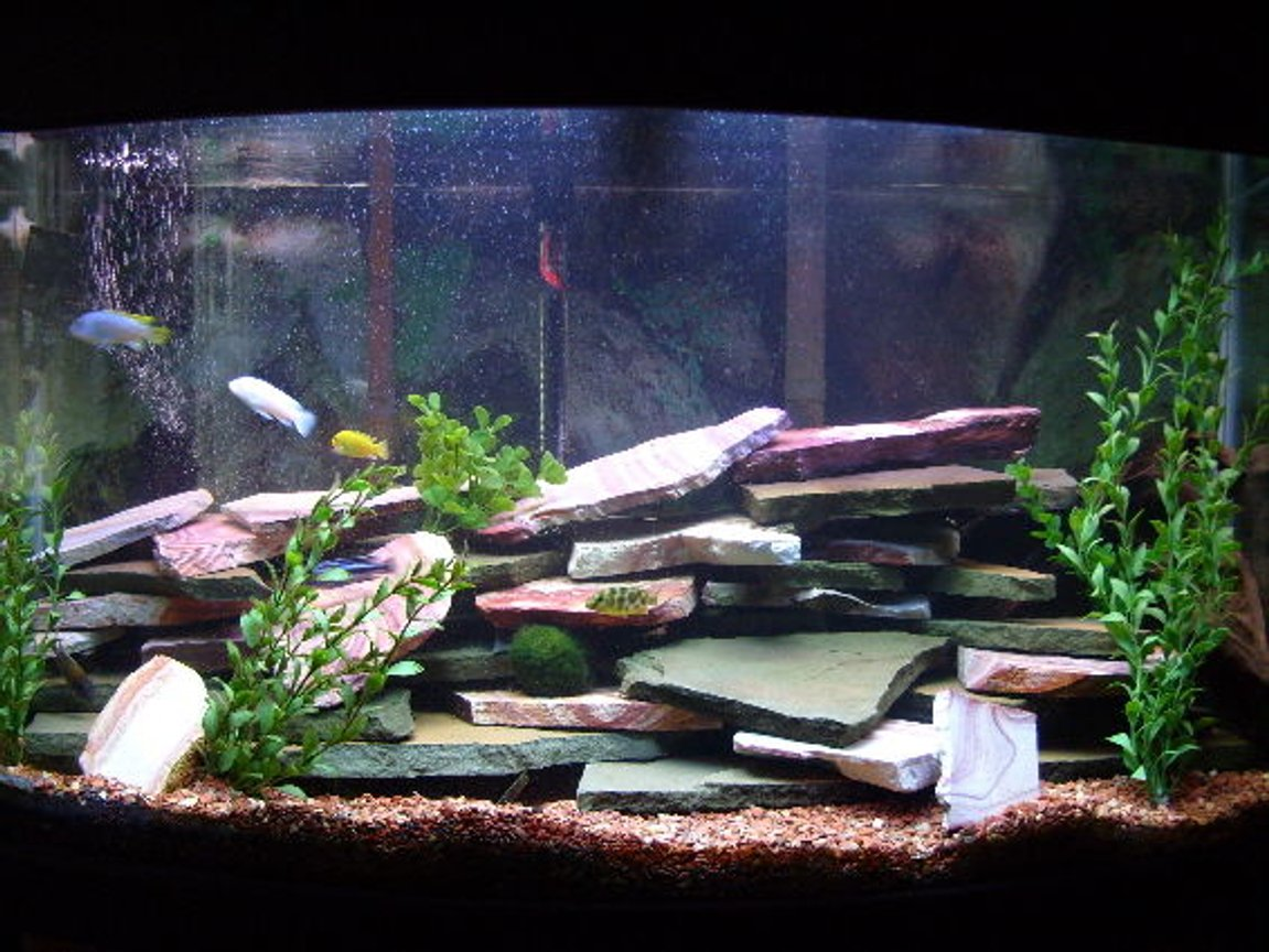 46 gallons freshwater fish tank (mostly fish and non-living decorations) - My 46 gal bowfront tank