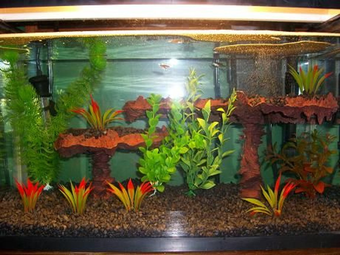 10 gallons freshwater fish tank (mostly fish and non-living decorations) - My current 10 gallon.